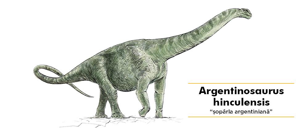 Argentinosaurus hinculensis