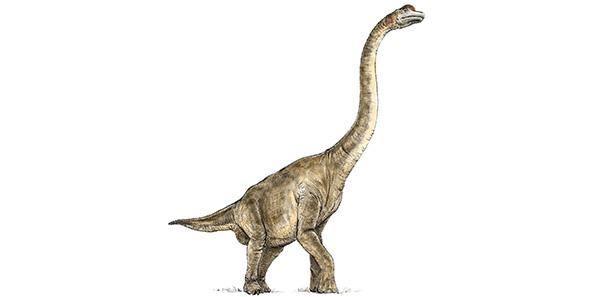 Brahiosaurus
