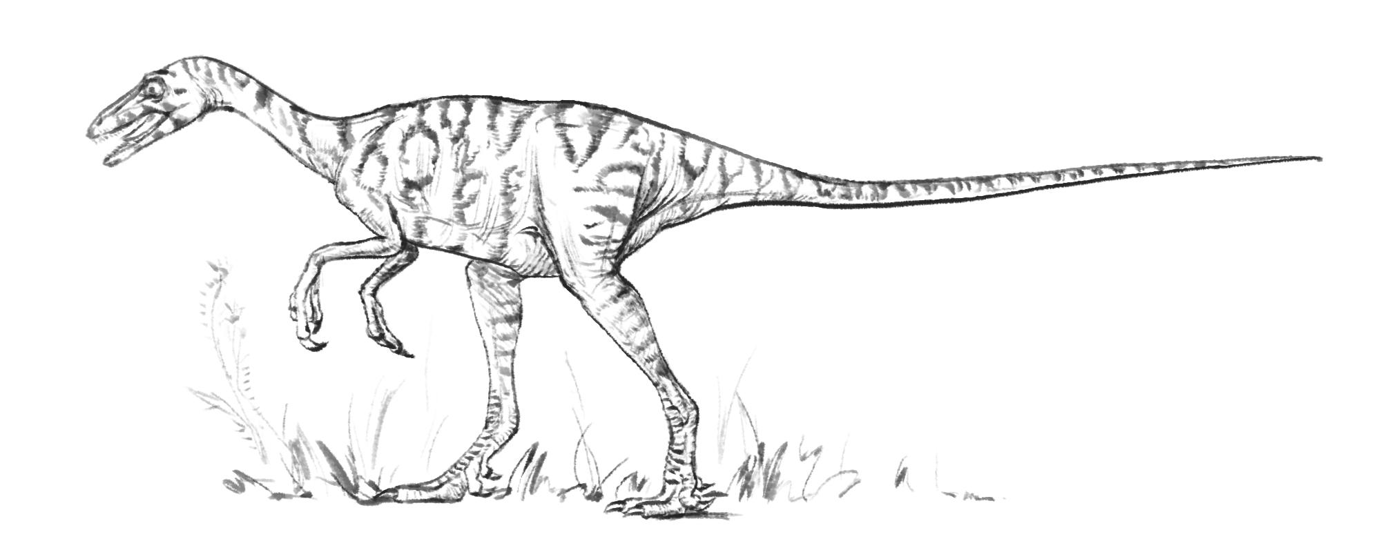 Eoraptor Lunensis Scoala Discovery