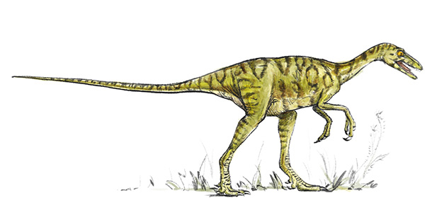 Eoraptor lunensis