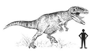 Giganotosaurus carolinii