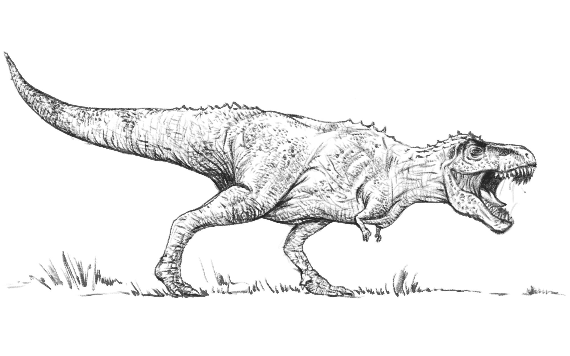 Tyrannosaurus Rex Scoala Discovery