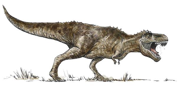 Dinozaurul rex